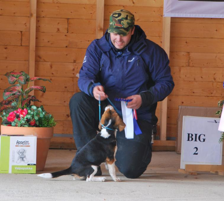 beagle valper til salgs